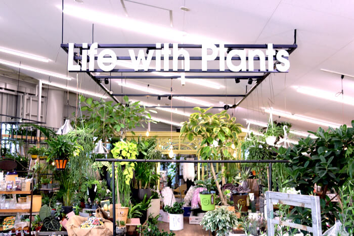 観葉植物展示コーナー